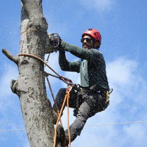 spilovanie_a_orezavanie_stromov